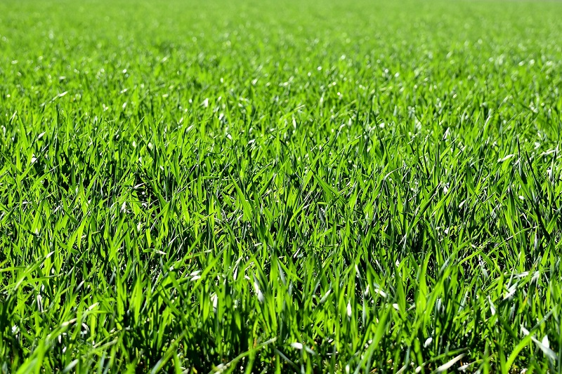 Gnojenje trave oziroma sestava gnojila je najbolj odvisna od klimatskih pogojev
